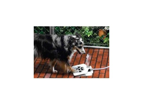 Fontaine pour chiens