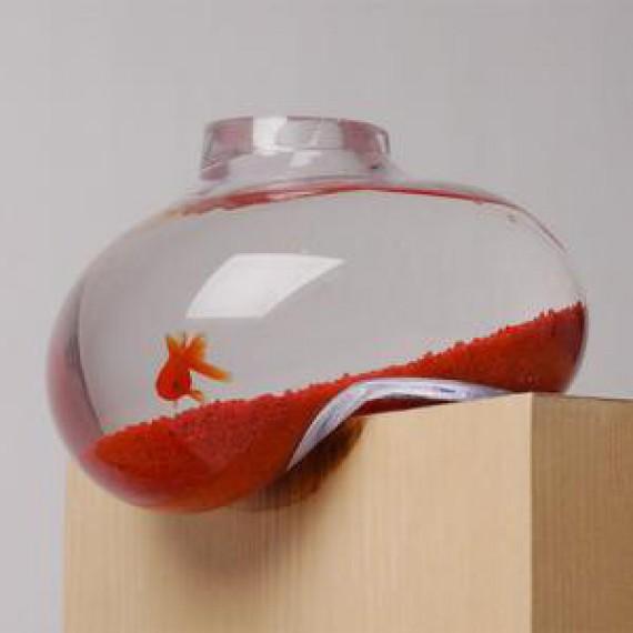 Aquarium en équilibre