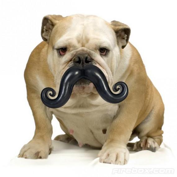 Moustache pour chien