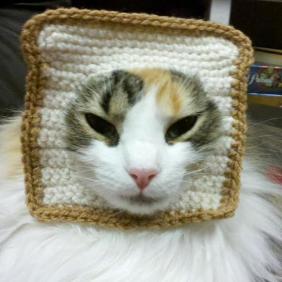 Le déguisement toast pour chat