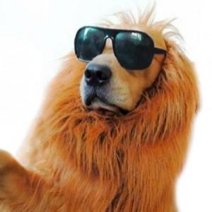 La crinière de lion pour chien