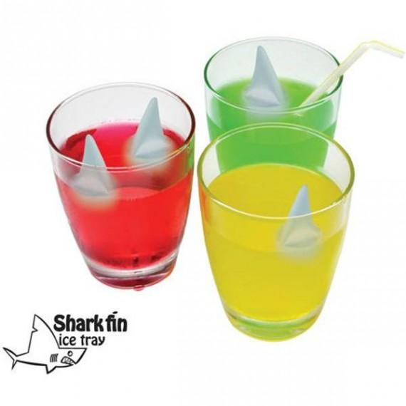 Glaçons Requin
