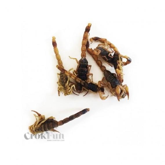 Scorpions Comestibles
