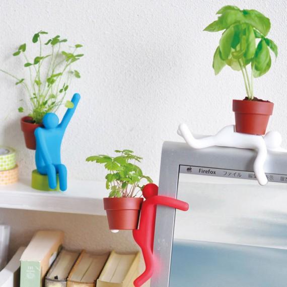 Plante à faire pousser Potman