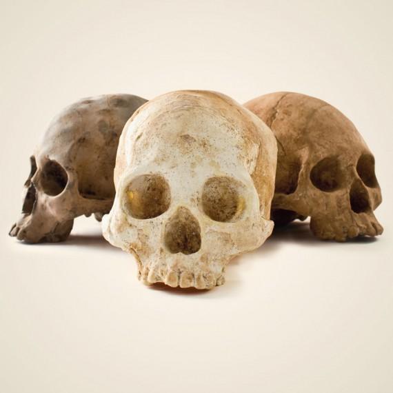 Crâne en chocolat