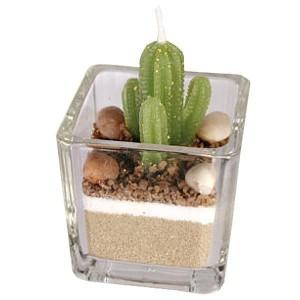 Bougie Cactus