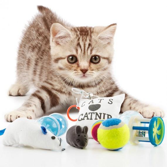 Lot de 8 jouets pour chat : 1 coussin, 3 balles, 2 souris et 2 grelots