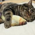 Peluche pour chat en forme de carpe (avec herbe à chat)