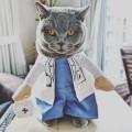Le déguisement docteur Chat (ou petit chien)