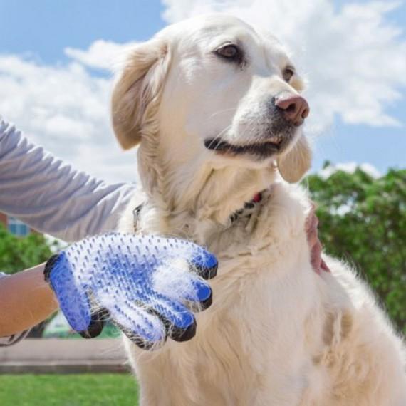 Gant de massage anti-poils pour chien et chat