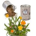 Canette avec graines de fleurs des prés à planter