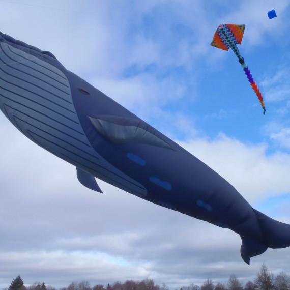 Cerf-volant baleine bleue taille réelle