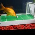 Le terrain de foot pour aquarium