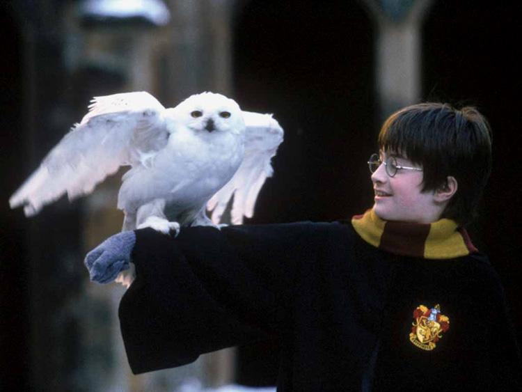 Hedwige et Harry