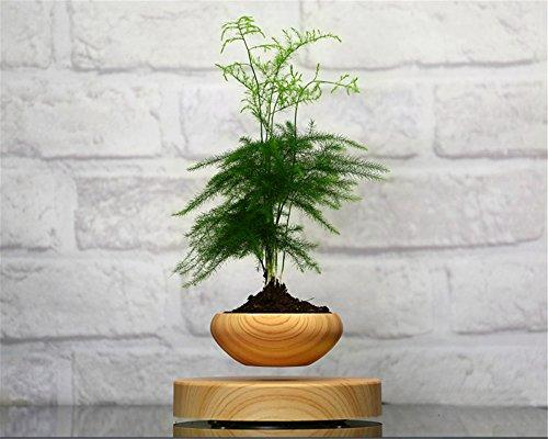 http://commentseruiner.com/pourlamaison/mini-jardin-en-levitation-imitation-bois