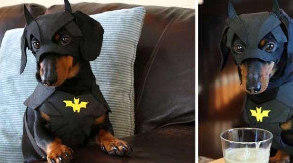 Batdog, le chien super-héros qui se prend pour Batman