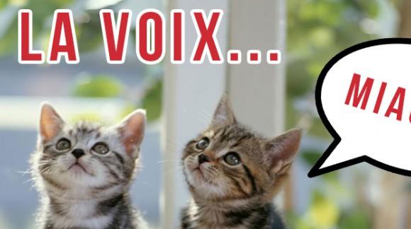 Le Secret Story des chats