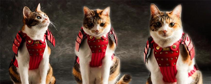Ceci n'est pas un chat. C'est un chatmouraï.